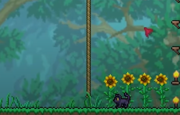 How to get a Cat License and Pet Cat in Terraria Journey