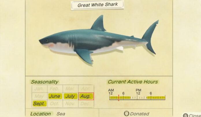 Comment attraper un grand requin blanc dans Animal Crossing New Horizons