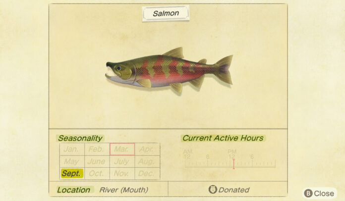 How to catch a salmon in Animal Crossing New Horizons